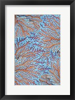Framed Sea Creatures Surface Pattern 1