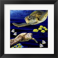 Framed Sea Creatures Turtle
