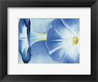 Framed Blue Morning Glories