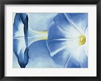 Framed Blue Morning Glories