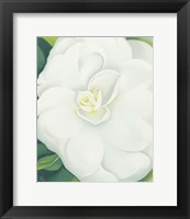 Framed White Camelia