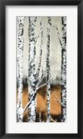 Framed Summer Birch