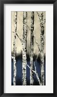 Framed Winter Birch