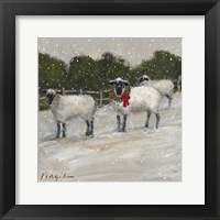 Framed Sheep in Snow