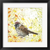 Framed Tree Sparrow