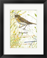 Framed Willow Warbler Postcard