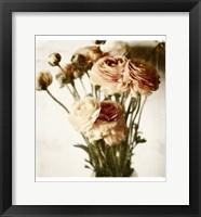 Framed Floral Ranunculus White Soft No Darks