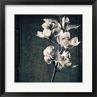 Framed Orchids Stem Texture