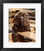 Framed Bryce Puppy