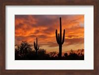 Framed Saguaros Amazing Sunset