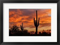 Framed Saguaros Amazing Sunset