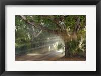 Framed Boca Grande Banyon Street