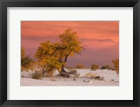 Framed White Sands Yellow Tree