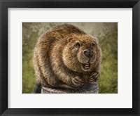 Framed Beaver Totem