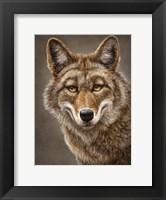 Framed Coyote Totem