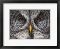 Framed Great Grey Owl Totem