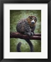 Framed Mongoose Lemur Totem