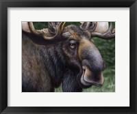 Framed Moose Totem