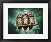 Framed One Hoot Wonders