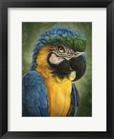 Framed Parrot Totem
