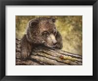 Framed Kodiak Cub