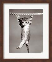 Framed 1950s Little Kitten Hanging From Rope