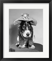 Framed Bassett Hound Dog With Ice Pack On Head