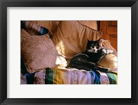 Framed Tuxedo Cat Sitting On Sofa