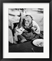 Framed 1930s Very Old Chimpanzee