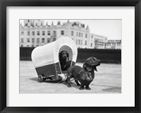 Framed 1930s Two Dachshund Dogs