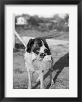 Framed 1930s Dog Holding Cat