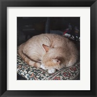 Framed Sleepy Afternoon