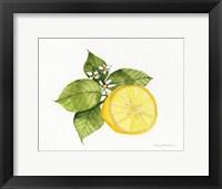 Citrus Garden IX Framed Print