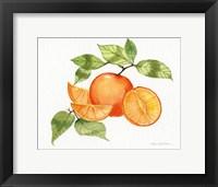 Citrus Garden VIII Framed Print