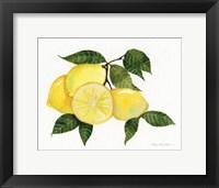Framed Citrus Garden VI