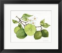 Framed Citrus Garden VII