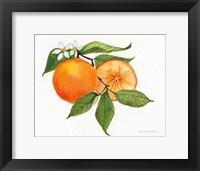 Framed Citrus Garden V