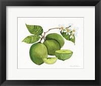 Framed Citrus Garden IV