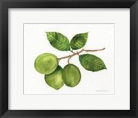 Framed Citrus Garden II