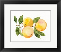 Framed Citrus Garden III