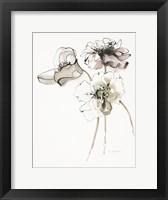 Framed Three Somniferums Poppies Neutral