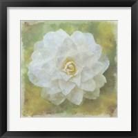 Framed Camelia White