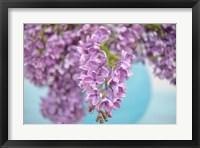 Framed Lilacs in Blue Vase I