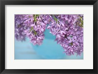 Framed Lilacs in Blue Vase V