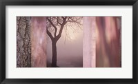 Framed Pink Tree Collage