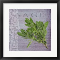Framed Classic Herbs Sage