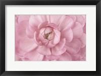 Framed Pink Flower Petals