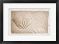 Framed White Shells and Sand