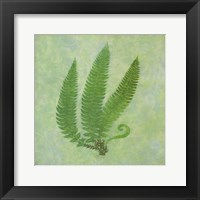 Framed Fern Series Vintage II
