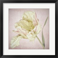 Framed Pink Parrot Tulip Painting I